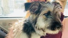 I Fostered A Puppy During COVID-19. It Helped In An Unexpected Way