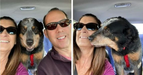 Dog Found Guarding His Deceased Owner In The Snow Finds A Loving New Home
