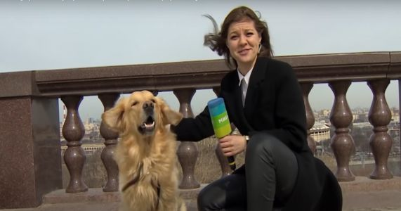 Dog Impolitely Achieves His Dream Of Becoming A News Reporter
