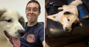 SPCA Helps Military Serviceman Bring Home Stray He Bonded With Abroad