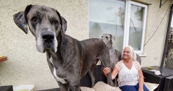 Freddy The World's Tallest Dog Passes Away At 8 ½ Years Old