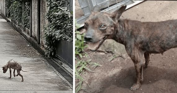 Former Hairless, Starving Stray Lives A Completely Different Life Now