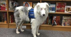 We Could All Learn A Life Lesson From This Blind, Deaf Therapy Dog