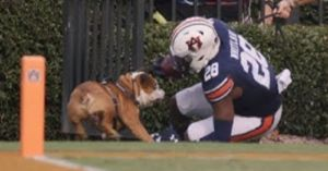 Mascot Bully the Bulldog Takes a Sideline Hit, PETA Calls for Retirement