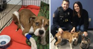 Abused Puppy Finds A Home With The Officer Who Saved Him