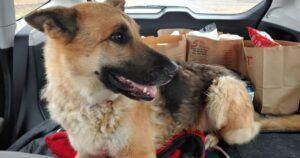 A Missing Dog Made It All The Way From Texas To Oklahoma