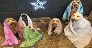 Sorry, But This All Dog Nativity Play Is Better Than Yours