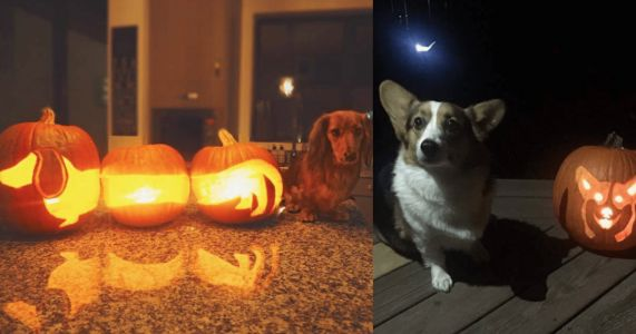 18 Adorable Dog-O-Lanterns To Inspire You This October