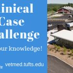 Clinical Case Challenge: A Cat with Progressive Lethargy