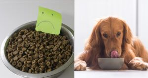 People are shocked to learn kibble is 50% carbs! 2 ways to boost your dog's protein on a budget