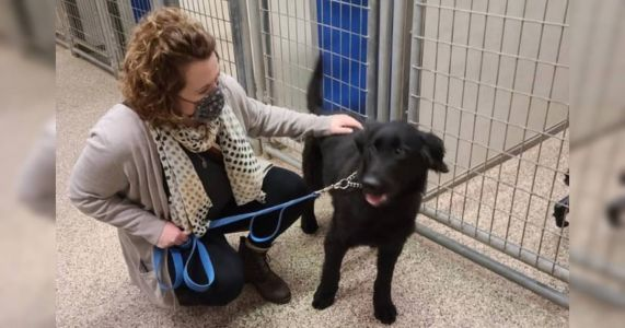 """""""Hero"""" Dog Who Helped 5 Others Escape From Hoarding Finds The Perfect Home"""