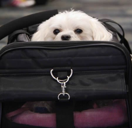 What To Do When You Must Leave Your Pet Behind At The Last Minute