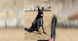 Police K9 Battling Cancer With The Help Of His Community
