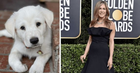 Lord Chesterfield The Rescue Puppy Steals Jennifer Aniston's Heart