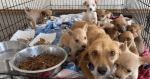 You Can Help This Mom And Her 11 Pups Fly To Safety
