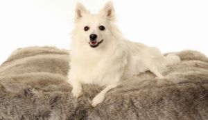 10 Breeds That Are Often Mistaken For Another Breed