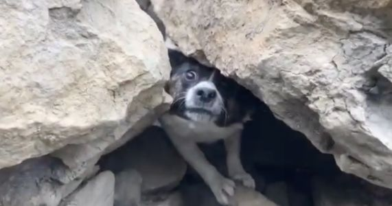 Missing Terrier Trapped Under Fallen Rocks Found After 3 Days