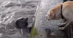 Dog And Seal Play Adorable Game Of Hide And Seek