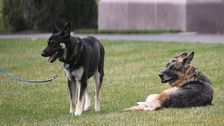 FDR's German Shepherd, Major, Had A History Of 'Biting Incidents,' Too