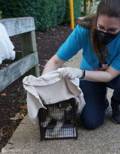 Alley Cat Allies in Action: A Walk-Through of TNR During the COVID-19 Pandemic