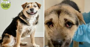 World's Cutest Rescue Dog Overcame Her Fears With The Sweetest Smile