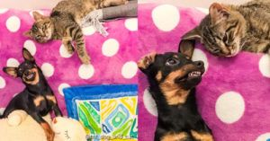 Taco & Tequila, Dog and Cat Besties Create Purrfect Combo
