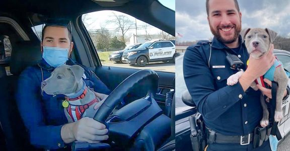 Police Officer Welcomes Rescued Pittie Puppy Into His Family
