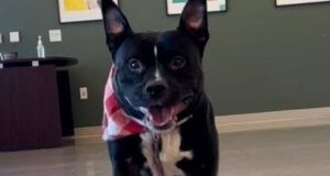 Ohio Community Demands Justice For Pit Bull Who Died Months After Being Adopted