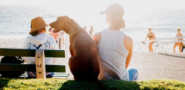 Prepare for Illness when Traveling with Your Dog and Your Family