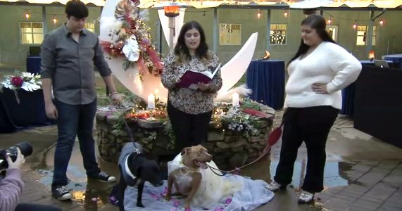 Rescue Dog Couple Ties The Knot To Support Heartworm Survivors