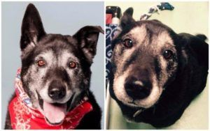Dog Rescued From Hurricane Katrina Has Been Waiting 10 Years To Find A Home
