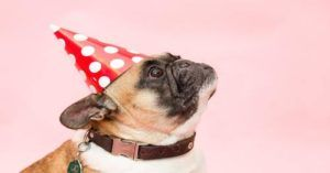 """There's A Better Way To Calculate Your Dog's """"Human Age"""" According To Scientists"""