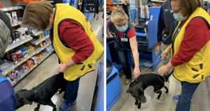 Lost Dog Travels To Walmart For Unlikely Reunion With Cashier