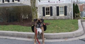 Senior Boxer Delivers Curbside Wine During COVID-19 Pandemic