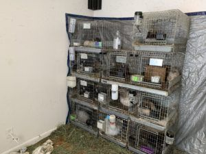 Update on the Seizure of 220 Animals from West Seattle Home