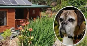 Unique Sanctuary Lets Dogs Live Out Their Lives In Luxury After Their Owners Pass