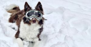 Dog Gets So Excited Over Her New Snow Goggles