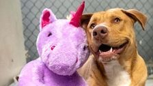 Stray Dog Who Kept Stealing Stuffed Unicorn Finds New Home With His Beloved Toy