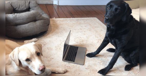 Sportscaster Dad Catches Dogs' Catfishing With Online Dating Profiles
