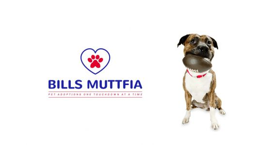 Buffalo Bills Touchdowns Help Find Families For Shelter Dogs