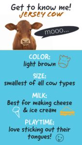 All About Cows!