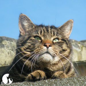 Alley Cat Allies Global Cat Day® is October 16, 2020