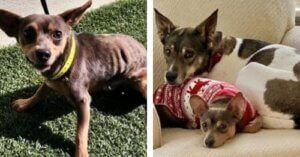 You Helped Dre Find A Forever Home Filled With Love