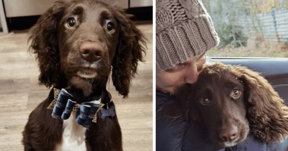 Lost Spaniel Found At Scrapyard Just In Time For The Holidays