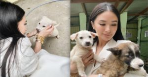 Heart Evangelista Helps Dogs Rescued From Taal Volcano