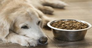 7 Ways Happy, Healthy™ Topper Can Benefit Senior Dogs
