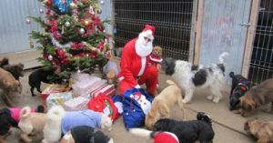Santa Visits Romanian Shelter Each Year To Pass Out Toys & Goodies