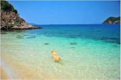 Dog Friendly Beaches in the Canary Islands
