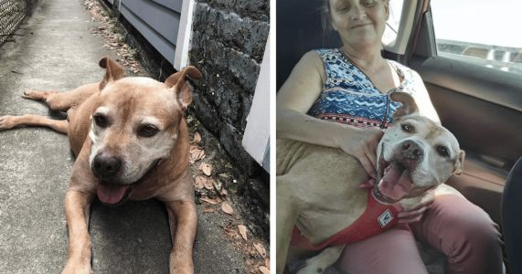 Senior Pit Bull Cried At Shelter For A Year Until Family Returned For Her