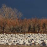 The Economic Impact of Birding on National Wildlife Refuges: Creating Local Jobs